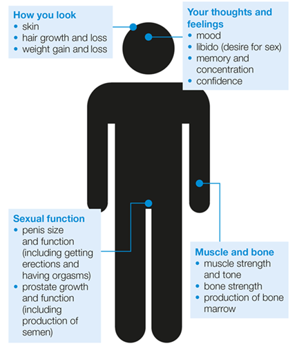 does testosterone increase prostate cancer risk